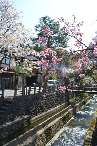0215S 130504 takayama.jpg