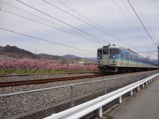 12041501 momo yamanasi.jpg