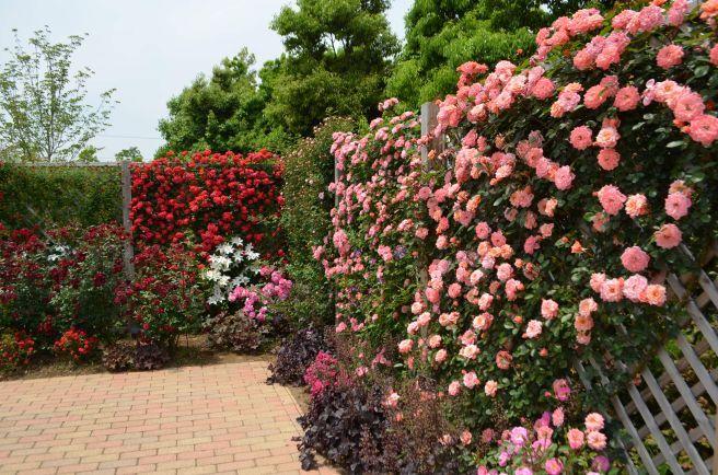 120526008 kana garden.jpg