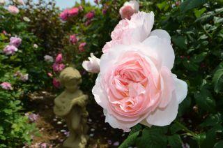 120526103 kana garden.jpg