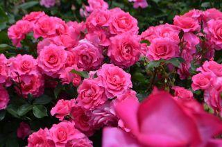 120526108 kana garden.jpg