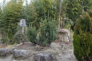 140209 2404S yakushiji temple.jpg