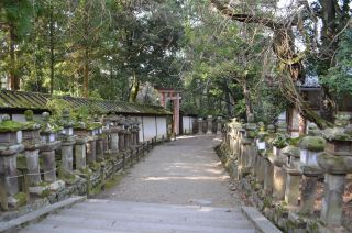 140210 3305S kasugataisha shrine.jpg