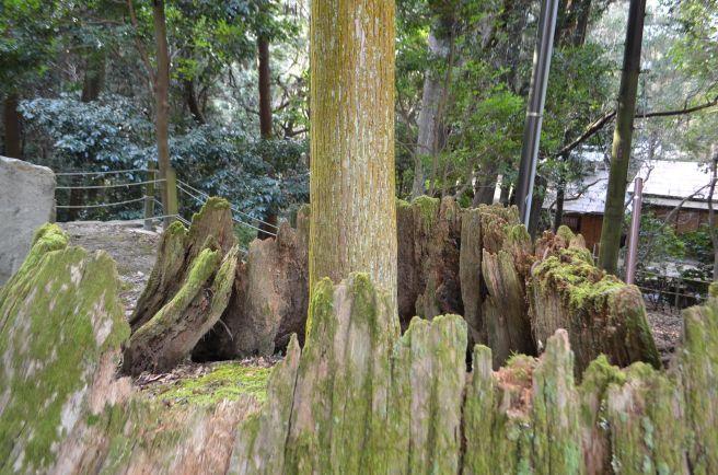 140210 3314W kasugataisha shrine.jpg