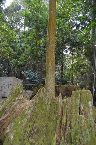 140210 3315T kasugataisha shrine.jpg