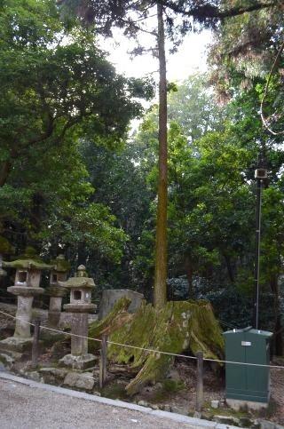 140210 3316T kasugataisha shrine.jpg
