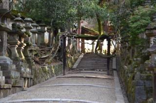 140210 3318S kasugataisha shrine.jpg