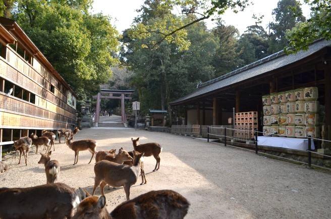 140210 3320W kasugataisha shrine.jpg